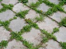 Textura inconsútil de una pista de la piedra de pavimentación en una hierba verde fotografía de archivo