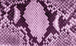 Textura incons?til de la piel de serpiente Moda para los reptiles tropicales Piel de serpiente púrpura teñida Fondo de la lila imágenes de archivo libres de regalías
