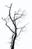 Textura inoperante da árvore Fotografia de Stock Royalty Free