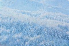 Textura inter del fondo de las vacaciones con los árboles de pino cubiertos por las nevadas fuertes Foto de archivo libre de regalías