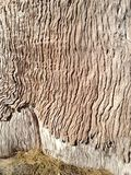 Textura interesante de la piel del árbol Foto de archivo libre de regalías