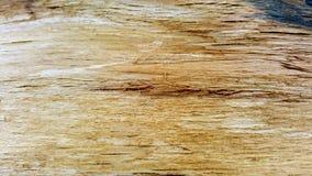 textura interna de una corteza de árbol imperecedera Imágenes de archivo libres de regalías