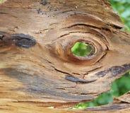 textura interna de una corteza de árbol imperecedera Foto de archivo libre de regalías