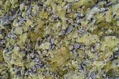 Textura islandêsa da lava Foto de Stock