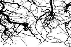 Textura Isolant en el fondo blanco Silueta blanca negra gráficos Ramificaciones de árbol con las hojas con nublado fotos de archivo libres de regalías