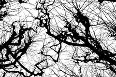 Textura Isolant en el fondo blanco Silueta blanca negra gráficos Ramificaciones de árbol con las hojas con nublado fotografía de archivo libre de regalías