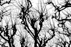 Textura Isolant en el fondo blanco Silueta blanca negra gráficos Ramificaciones de árbol con las hojas con nublado fotos de archivo