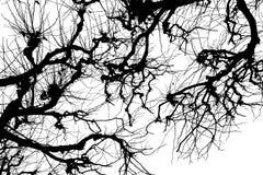 Textura Isolant en el fondo blanco Silueta blanca negra gráficos Ramificaciones de árbol con las hojas con nublado imagenes de archivo