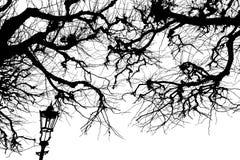 Textura Isolant en el fondo blanco Silueta blanca negra gráficos Ramificaciones de árbol con las hojas con nublado fotografía de archivo