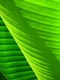 textura liści Zdjęcie Stock