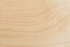 Textura ligera de la madera contrachapada del abedul, fondo abstracto Fotos de archivo libres de regalías