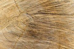 Textura - linhas e círculos no corte da árvore fotografia de stock royalty free