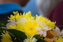 Textura macia do fundo da flor do crisântemo do amarelo do foco imagens de stock royalty free