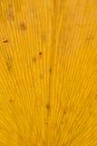 Textura macra de la hoja japonesa del Ginkgo del otoño Imagen de archivo libre de regalías