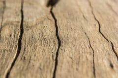 Textura macro de madeira - 8 Imagens de Stock Royalty Free