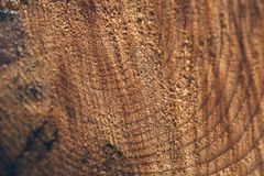 Textura macro do tronco de árvore cortado Coto do pinheiro textura e fundo de madeira para o projeto Texturas orgânicas fotos de stock royalty free