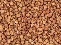 Textura madura do trigo mourisco foto de stock