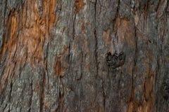 Textura marrón áspera de la corteza Imagen de archivo