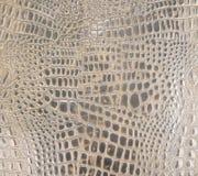 Textura marrón clara del cuero del cocodrilo Imagen de archivo