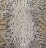 Textura marrón clara del vientre del cocodrilo Fotografía de archivo libre de regalías