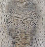 Textura marrón clara del vientre del cocodrilo Foto de archivo