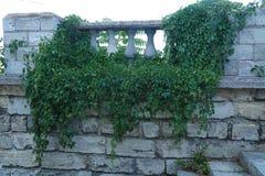 Textura masonry Fragmento de uma parede antiga em que uma planta verde cresce fotografia de stock