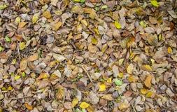 Textura moída das folhas de outono Fotografia de Stock Royalty Free