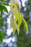 Textura, modelo, fondo Caída de las hojas Hojas y ramitas con ilustración del vector