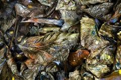 Textura mojada de las hojas foto de archivo libre de regalías