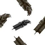 Textura monocromática sem emenda com penas de pássaro Imagem de Stock