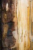 Textura mouldering velha da madeira de carvalho Fotografia de Stock Royalty Free
