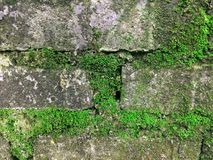Textura musgoso do tijolo Imagens de Stock Royalty Free