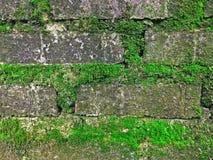 Textura musgoso do tijolo Fotografia de Stock Royalty Free