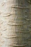 Textura na casca Foto de Stock Royalty Free