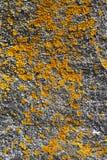 Textura natural Fotografia de Stock