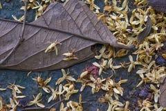 Textura natural Foto de archivo