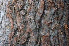 Textura natural bonita do uso de madeira da prancha da casca como de madeira da natureza textured fotografia de stock royalty free
