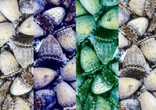 Textura natural construída de flores secadas Fotos de Stock