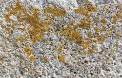 Textura natural crecida musgo de piedra Fotos de archivo libres de regalías