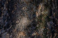 Textura natural da casca arborizado Imagem de Stock Royalty Free