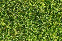 Textura natural da grama Fotografia de Stock