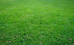 Textura natural da paisagem da grama fotos de stock