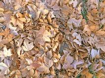 Textura natural de hojas el caída Imagen de archivo
