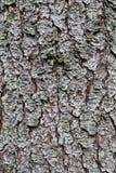 Textura natural de la corteza del pino Foto de archivo libre de regalías