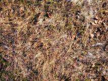 textura natural de la planta imagenes de archivo
