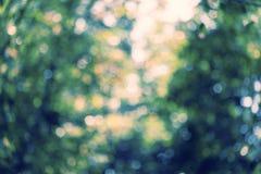 Textura natural del bokeh del verdor Fotos de archivo
