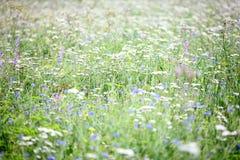 Textura natural del eco Foto de archivo libre de regalías