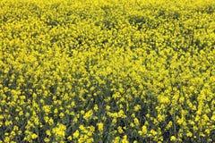 Textura natural del eco Imagen de archivo libre de regalías