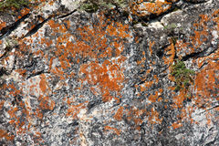 Textura natural del eco Imagenes de archivo