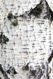 Textura natural del eco Foto de archivo